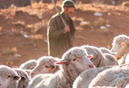 pastor-ovelha